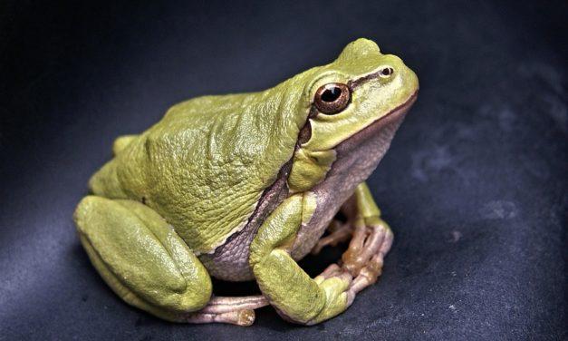 Ekologiczna potrawka z żaby, grzybów i konia
